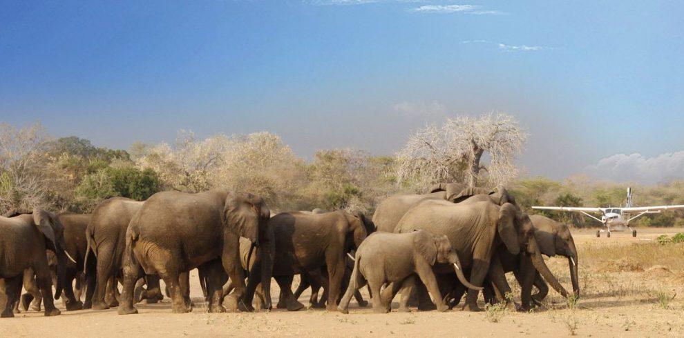 Elephants Selous