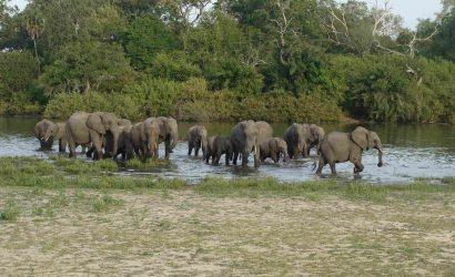 Selous Game Reserve elephants