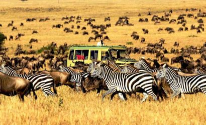 4 Days Tarangire, Serengeti and Ngorongoro Crater