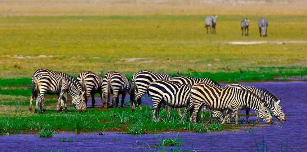 Amboseli National Park2