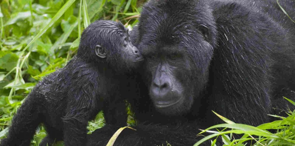 Bwindi Impenetrable Forest National Park