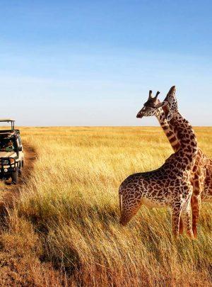 Weekend Safaris