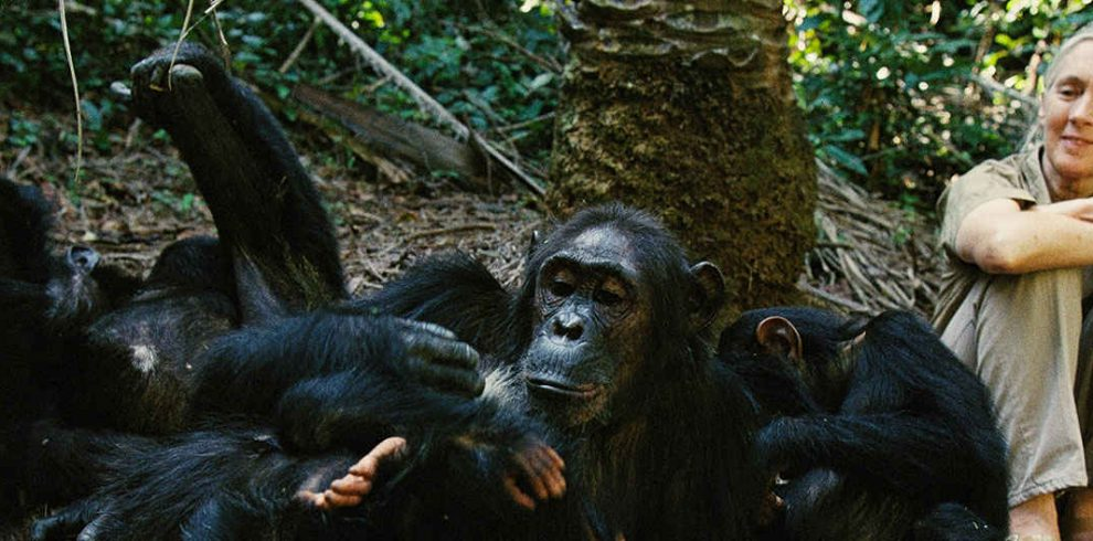 gombe-national-park-chimps-jane-goodall